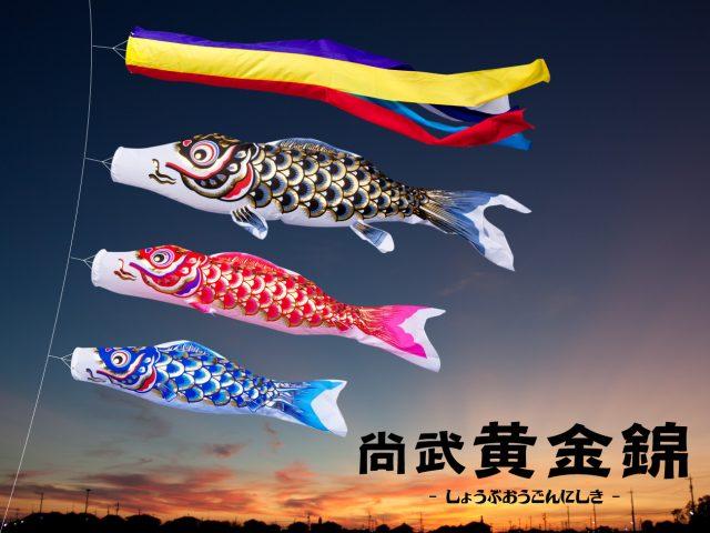 コスパに優れた人気鯉のぼり「尚武黄金錦」