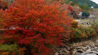 11月は紅葉の最後の見頃!色彩豊かな奥津渓の紅葉を見に行きました!