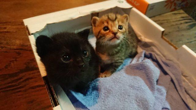 ウチに来た猫ちゃんが可愛くて困ってます!